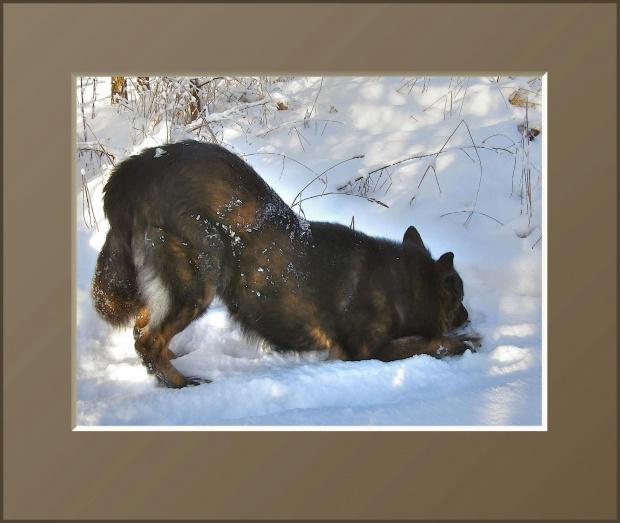 Czyżby muezin się odezwał? E nieee... Pozory mylą... To tylko śnieg w łapach... #drzewa #flora #łąki #pola #psy #śnieg #wieś #zima #zwierzęta