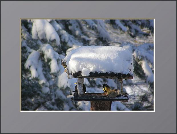 #drzewa #flora #łąki #pola #ptaki #śnieg #wieś #zima #zwierzęta