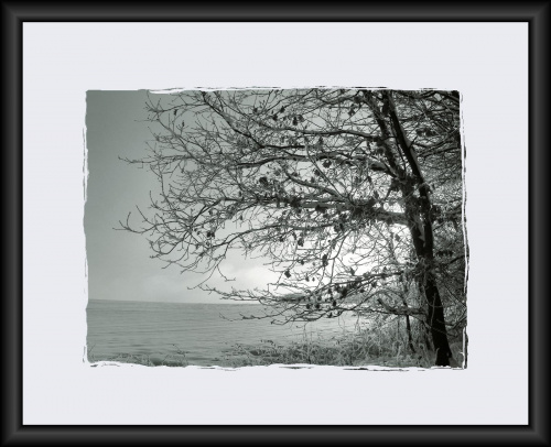 #drzewa #flora #łąki #pola #śnieg #wieś #zima
