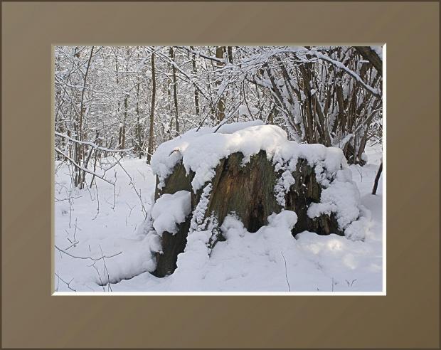 #drzewa #flora #łąki #pola #śnieg #wieś #zima #zwierzęta