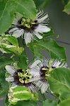 http://images6.fotosik.pl/426/85d8bc550df6ff4em.jpg
