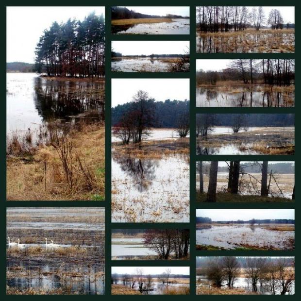 rzeka Ina wylała.............na wiosne :))) #rzeka #rozlewisko #Ina
