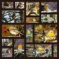 historia jednej znajomości :) cały czas towarzyszył mi w pracy w ogródku i wcale sie nie bał .... :))) to chyba rudzik :)) #ptaki #rudzik
