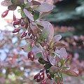 Letnie i jesienne fotki 2008 #zielone #łąka #kwiaty #rosliny