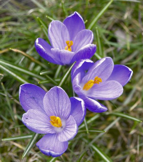 Pierwsze uśmiechy wiosny....