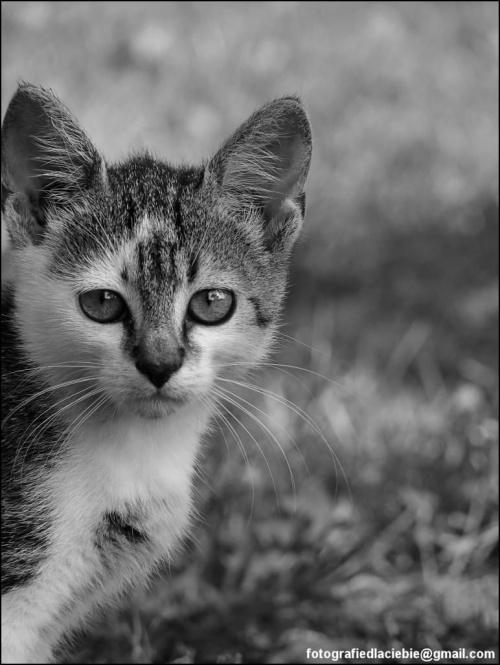 Przygarnij mnie ... #ZwierzętaDomowe #koty #kociaki #emocje