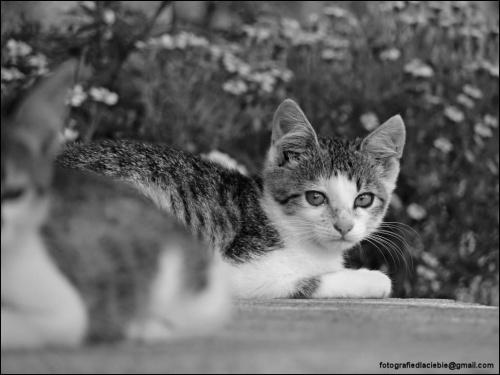 Nie obrażaj się nie mnie ... #ZwierzętaDomowe #koty #kociaki #emocje