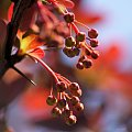wiosenne różności ... :)) #krzewy #berberys #wiosna #ogród #makro