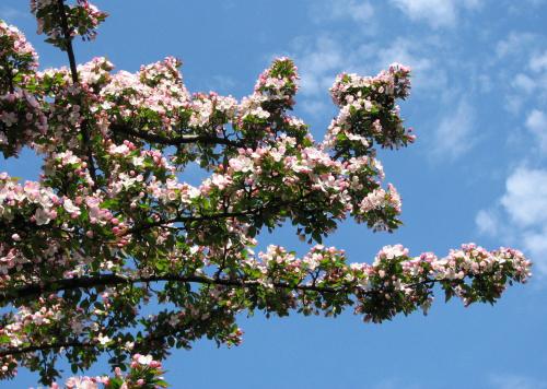 Wizyta w ogrodzie bot. #CesarskaKorona #azalia #niezapominajki #tulipany #bratki