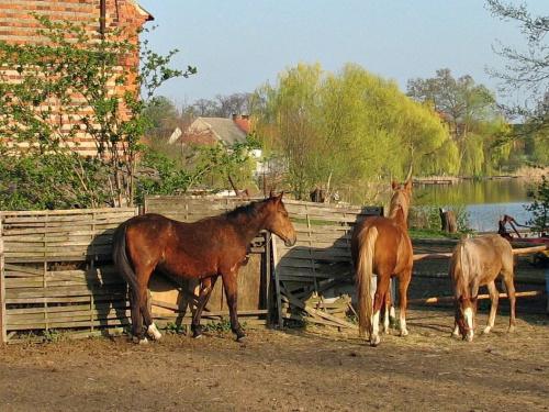 z rodzinnych stron #Lubięcin #jezioro #konie