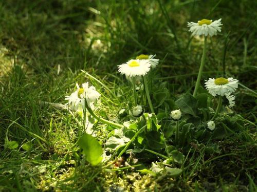 tajemnica wiosny ..