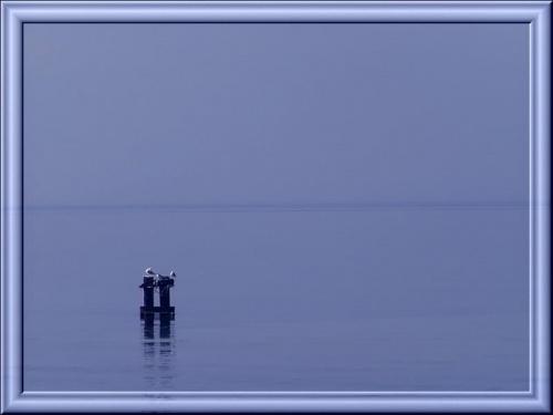Był taki dziwny, cichy dzień nad morzem. Niebo zlewało się z wodą, szaro-niebieska mgła przykryła słońce, nawet mewom nie chciało się latać... #morze