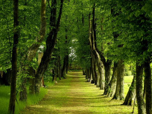 spokój zieleni