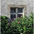 #okno #róże