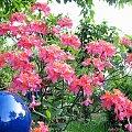 maj w ogrodzie ... #azalia #ogród #wiosna #kwiaty