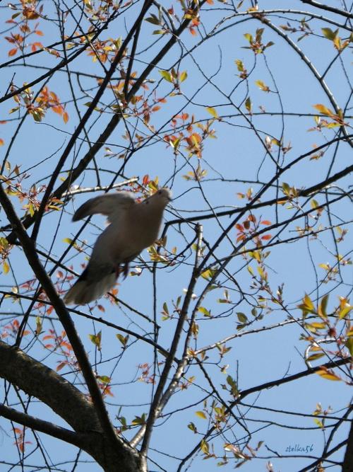 różne Boże stworzenia ... #ptaki #wiosna
