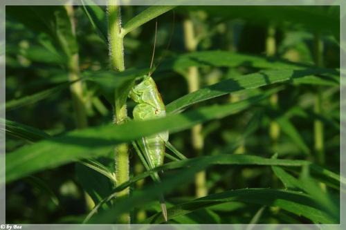 #owady #robaczki #działka