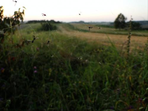 Podczas wyprawy na zachód słońca spotkałem taką rzeźnię... #pajęczyna #owady #martwe #nieżywe #zjedzone #pająk