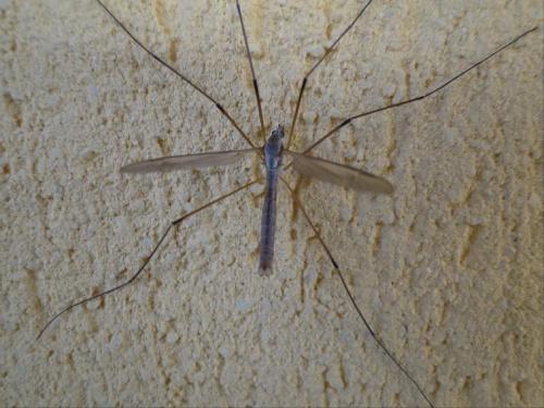 Na tynku ;) #owad #makro #tynk #mur #ściana