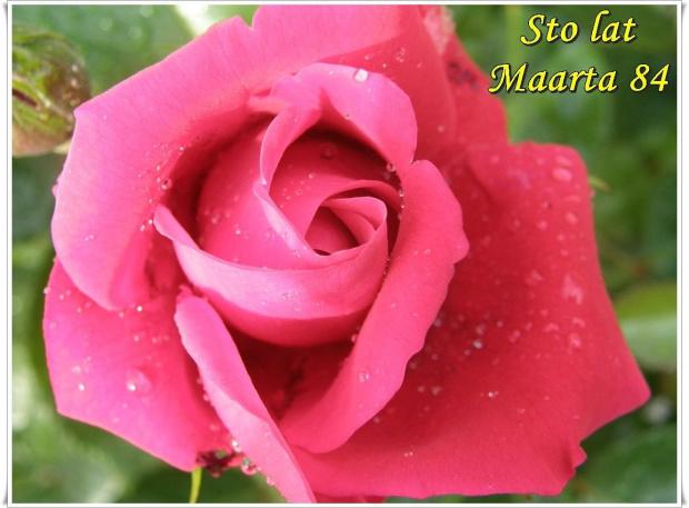 Sto lat dla Maarta 84