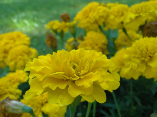 Dzieńdobry! Od dzisiaj nie ma mnie trzy dni. #kwiatki #kwiaty #makro #żółte