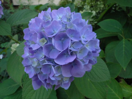 Dzieńdobry z rana Wam :-) #makro #kwiat #kwiaty #niebieskie #ZBliska