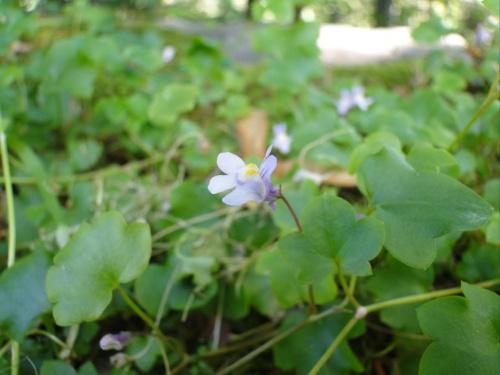 Maly kwiatek :-) #kwiatek #kwiat #makro #zbliżenie #przyroda