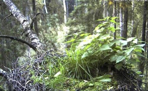 Estońskie gniazdo b.czarnego