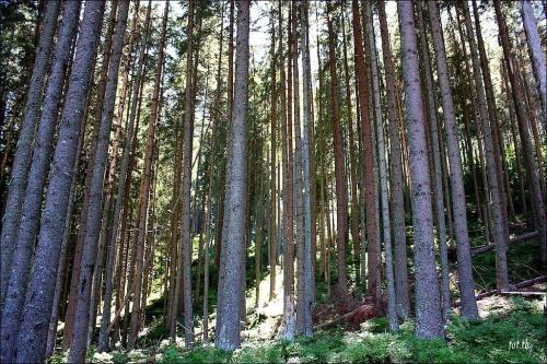 Kartki z podróży...urokliwe leśne miejsca...