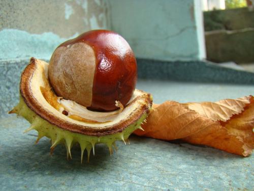 Jesienny owoc #Przyroda