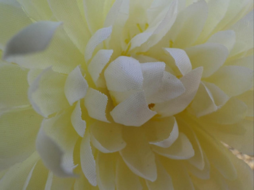 Kwiatek z grobu