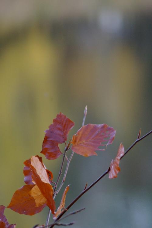 jesień na gliniankach #jesień #liście