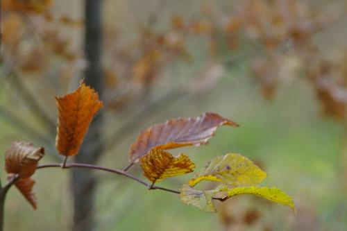 #jesień
