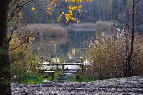 #las #jesień #kładka #staw #glinianki