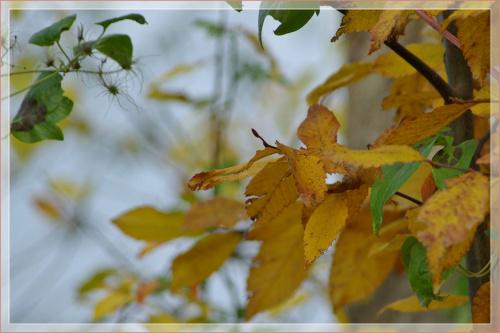 #liście #jesień #natura