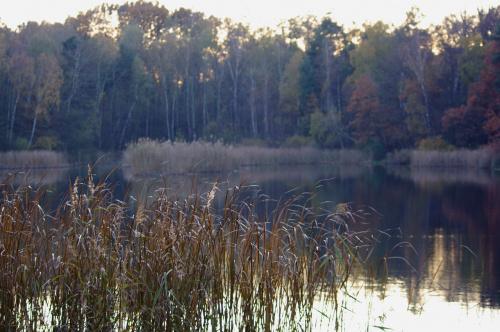 #jesień #staw #las #glinianki