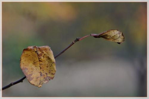 #jesień #liście