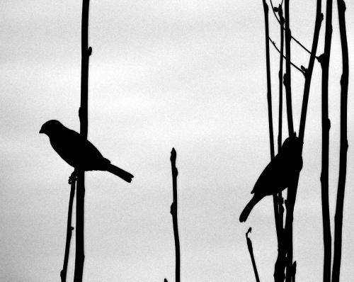 niezdecydowane..;).. jesienny teatrzyk cieni.. #ptaki #jesień #teatrzyk