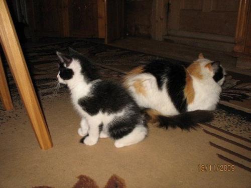Czujność zachowana, wąsy do przodu....... #koty