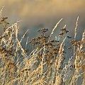 #trawy #jesień