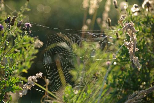 letnich wspomnień czar... #lato #pajęczyny #trawy #łąka