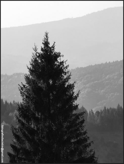 Blisko, dalej, najdalej ... #Krynica #Wierchomla #góry #widoki #panorama #drzewa #natura #jesień