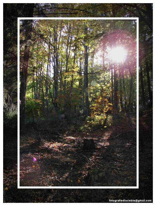 Przebijające się słońce w gęstwinie zarośli #Krynica #Wierchomla #góry #widoki #panorama #drzewa #natura #jesień