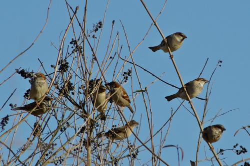 w ptasiej stołówce #ptaki #wróble